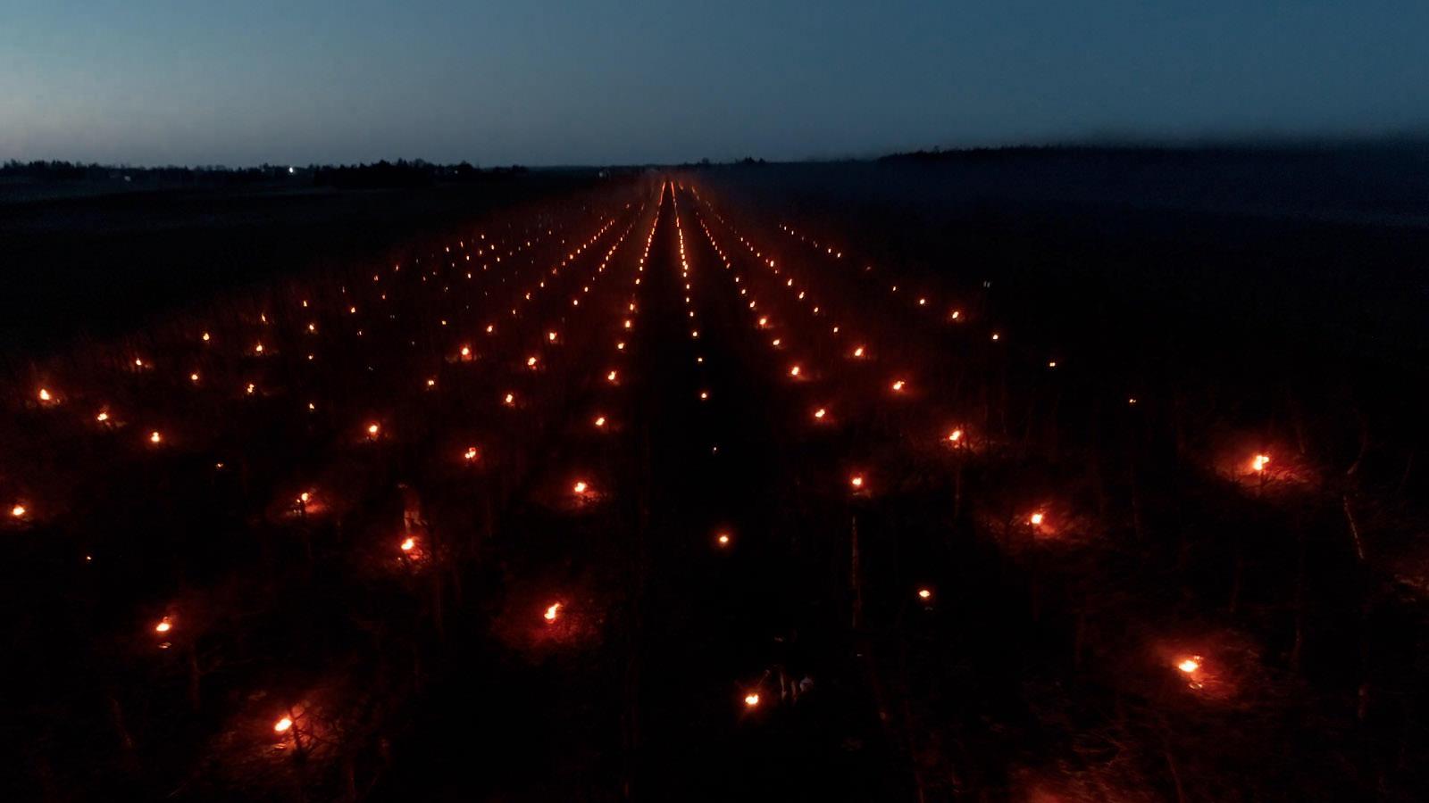 Świece sadownicze SADOX